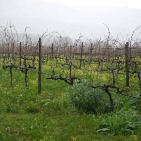 Wine the naturalway