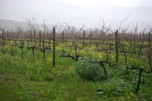 Vineyards at Reyneke 1