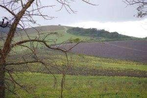 Vineyards at Reyneke